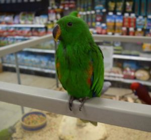 Birds for Sale in Florida - Visit Petland Fort Myers Pet Store!